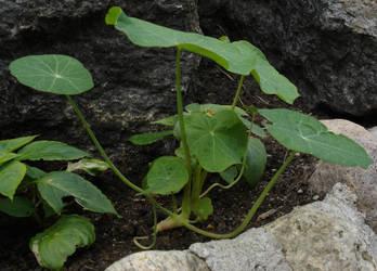 Plant - 02 by LunaNYXstock