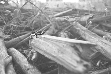 Abandoned Nature by danidejar