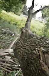 Abandoned Nature 2 by danidejar