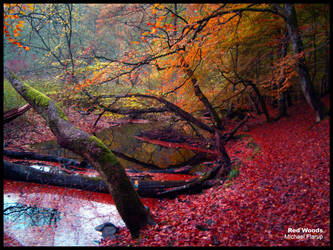 Red Woods by Flarup