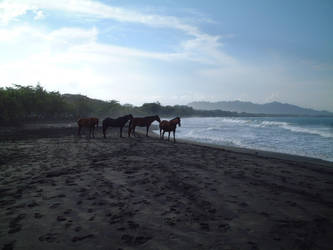 wild horses in Costa Rica by JannyCrow