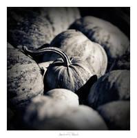Pumpkin by AndreasResch