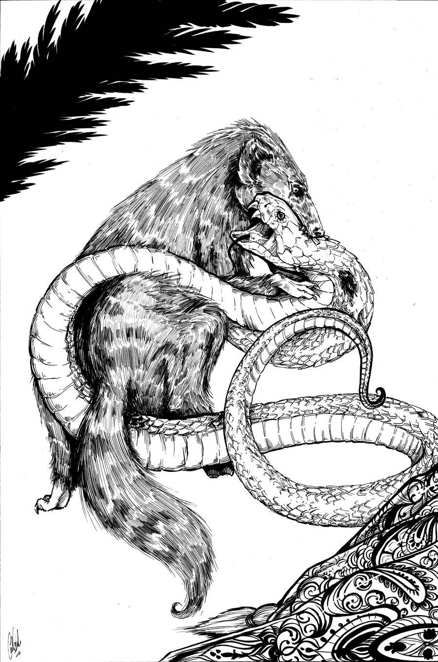 Jungle Book: Rikki-Tikki-Tavi by Carliihde
