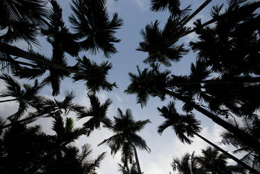 Circle of Coconut Trees by Kuldip