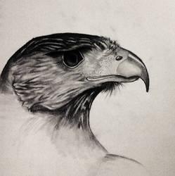Hawk by wimpified