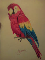 Crayon Parrot by wimpified