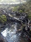 Eager brook in spring by Hattmannen