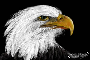 Bald Eagle by Rebecca1208