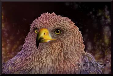 Harris Hawk by Rebecca1208