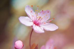 In bloom by AdrianaFilip