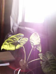 Plant by cravspuma