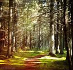 Forest 11 by orlibraorli