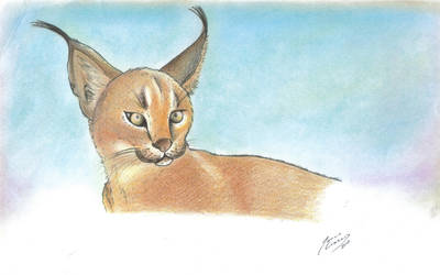 Lince by k0n0k0