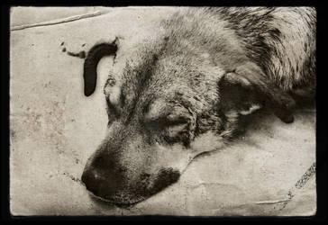 Deep sleep stray dog by Bobbyus