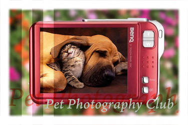 Pet Photography Club by Pet-Photography