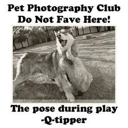 Q-tipper.04 by Pet-Photography