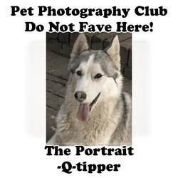 Q-tipper.05 by Pet-Photography