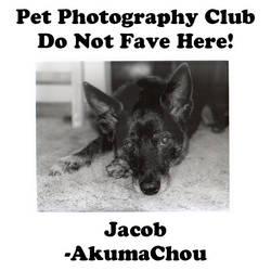 AkumaChou.02 by Pet-Photography