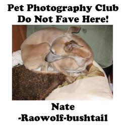 Raowolf-bushtail.01 by Pet-Photography