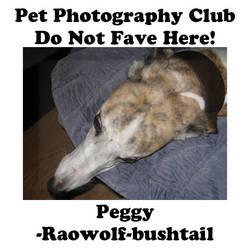 Raowolf-bushtail.02 by Pet-Photography