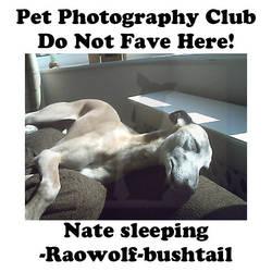 Raowolf-bushtail.03 by Pet-Photography