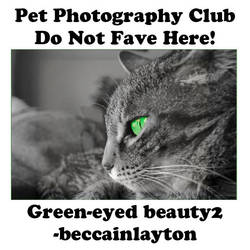 beccainlayton.01 by Pet-Photography