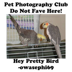 owasephi69.13 by Pet-Photography