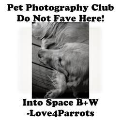 Love4Parrots.01 by Pet-Photography