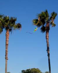 Trees Like Kites, Too by caiphana