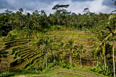 Ubud Rice Terraces by 4pm