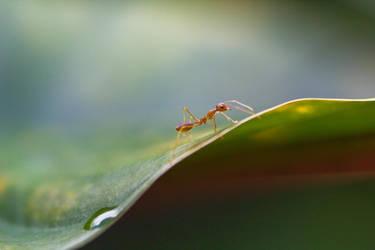 Ubud Ant by 4pm