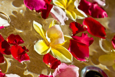 Petals in Water by 4pm