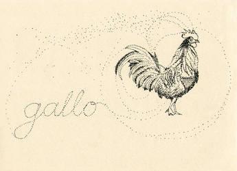 Gallo by sapfonelo