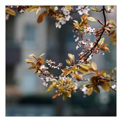 Spring In The City by Socratim