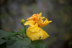 Yellow flower by chalkwebdesign