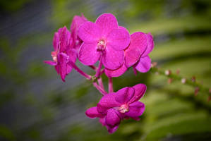 Purple flowers 2 close-up by chalkwebdesign