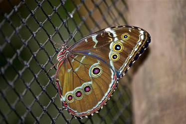 A butterfly by chalkwebdesign