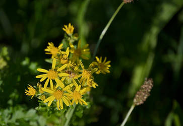 DogWalking - Yellow flowers 1 by chalkwebdesign
