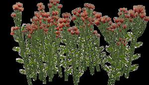 Flower 2 by Twins72-Stocks