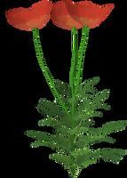 Flower 6 by Twins72-Stocks
