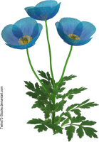 Flower 9 by Twins72-Stocks