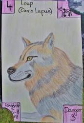 Swiss Nature Book: Wolf - Loup by MoonyMina