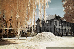 auschwitz in infrared - gate by greyfin