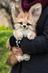 SOLD! Auction Handmade Poseable toy Fennec Fox by MalinaToys
