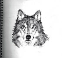 Wolf Sketch by ChevronLowery