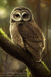 Northern Spotted Owl by Nambroth
