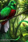 Resplendent Quetzal by Nambroth