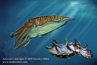 Cuttlefish by Nambroth