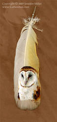 Barn Owl Portrait by Nambroth