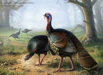Rio Grande Turkeys by Nambroth